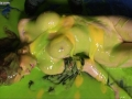 fi_stevens_bound_messy_gunged_008.jpg